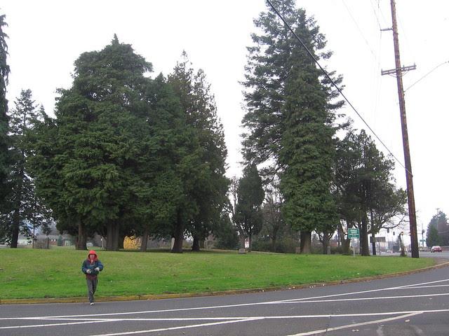 powell grove
