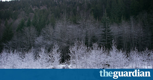 Major Austrian timber firm accused of illegal logging in Romania | Environment | The Guardian