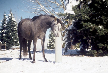 5-Tips to Tame Winter Horse Chores