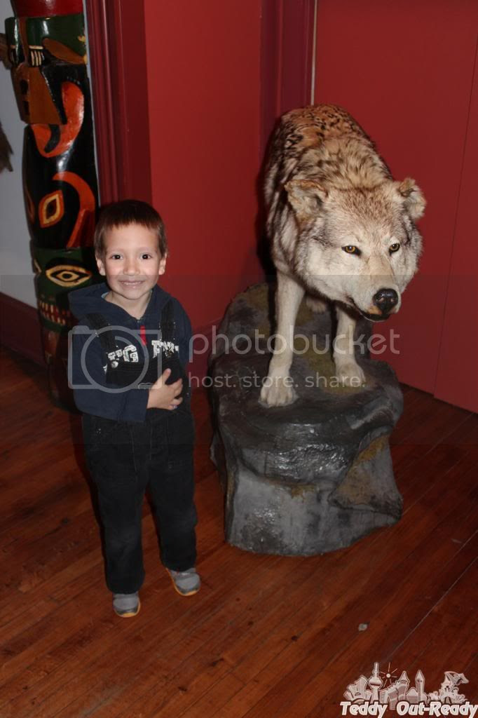 Texas Museum Bison