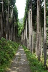 Along Kiyotaki River