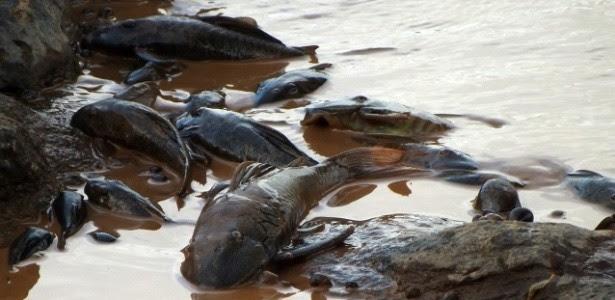 Peixes mortos no leito do Rio Doce: moradores e pescadores relatam cenário de horror ao longo do seu curso (Foto: Associação dos Pescadores e Amigos do rio Doce)