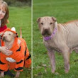 Meet chilly Lily: The hairless dog who has to wear an adult sized onesie to keep the cold out