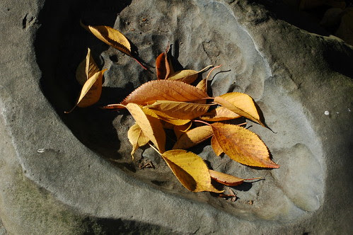 Cherry Leaves in Stone Basin