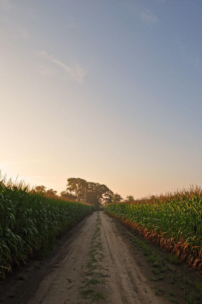 Lang Farm Road