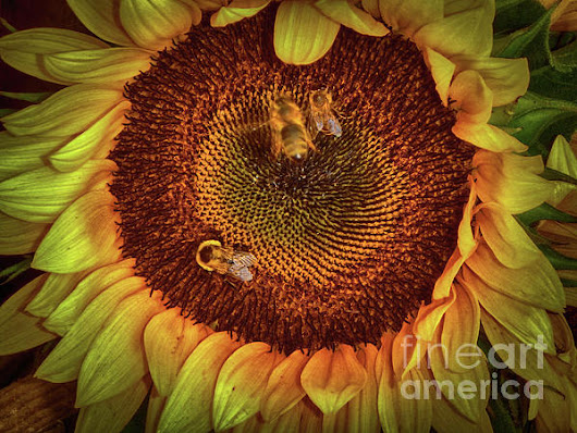 Sharing The Sunflower by Judy Hall-Folde