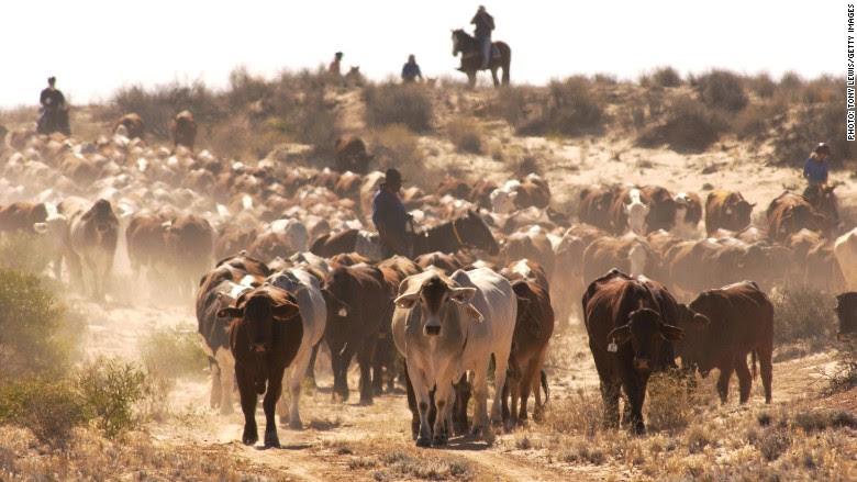 160419104746 australia cattle 780x439