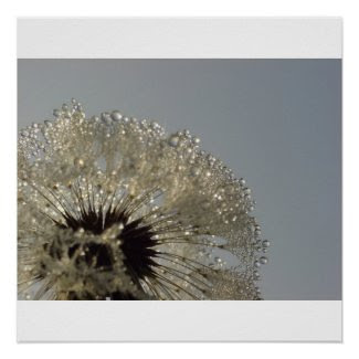 Wheel of droplets - Dandelion with droplets print