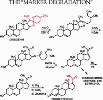 Marker Degradation Process Diagram