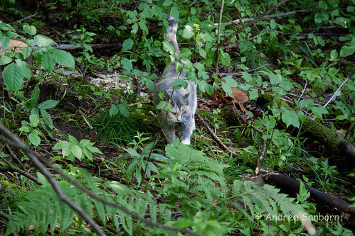 Possum Takes a Hike-14.jpg