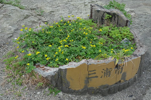 Flowers in a broken bucket?