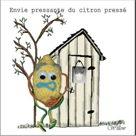 citron pressé Willow