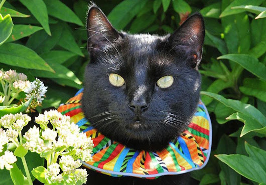 Cat scrunchies are saving birds' lives and making cats look stupid, two very important goals.