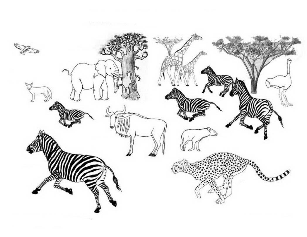 Desenhos De Animais Para Colorir: Desenhos De Animais Selvagens Coloridos Para Imprimir