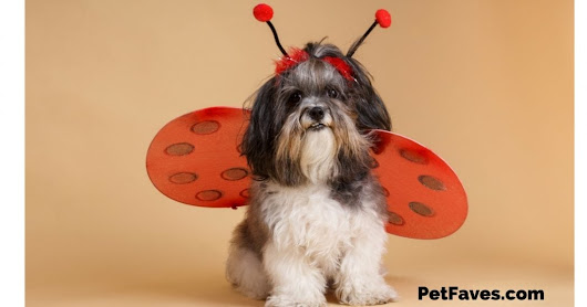 Pet Faves Picks- Halloween Costumes for Pets -