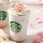 Starbucks Sakura 2013 Limited edition.