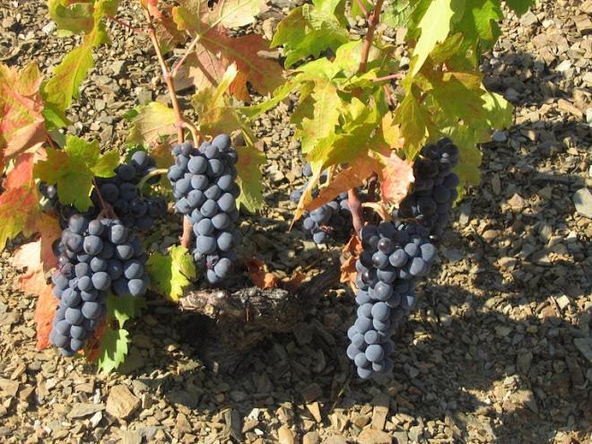 5.colores de la viña