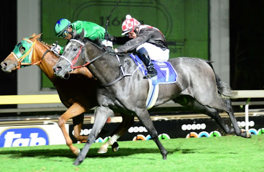 R150 000 Listed Swallow Stakes | Sporting post