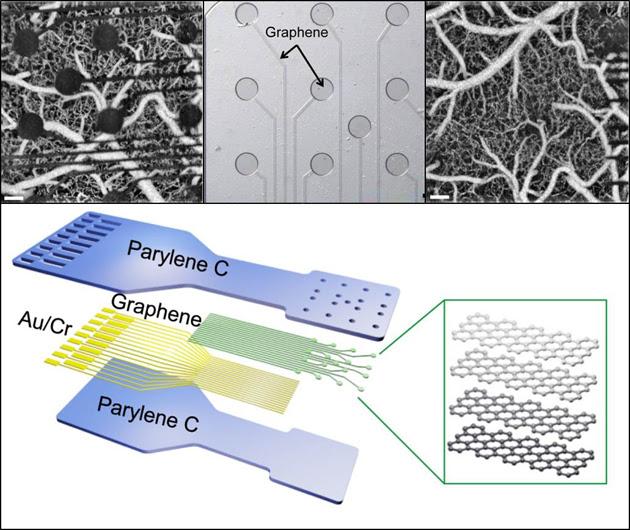 DARPA's graphene brain sensor