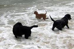 dog beach nantucket
