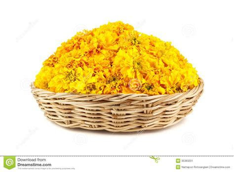 Marigold Flowers In A Wicker Basket Stock Image   Image