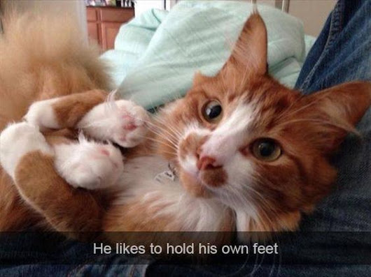 Image: cat memes – Quotes and Humor