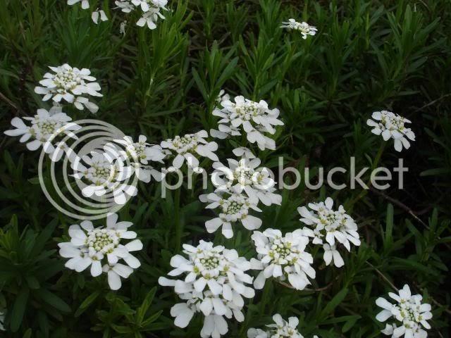 Blog di sara chi me lo fa fare - Sacchi di terra per giardino ...