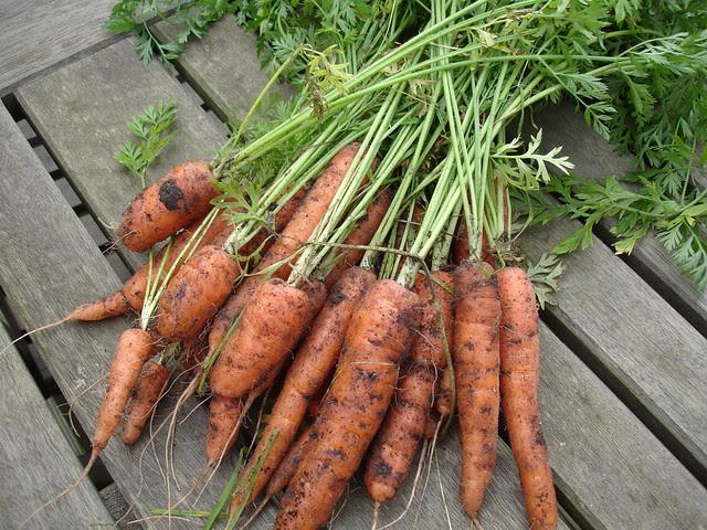 end of year veggies (4)