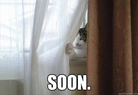 www.dumpaday.com/wp-content/uploads/2013/05/A-the-cat-behind-the-curtain-soon-meme.jpg