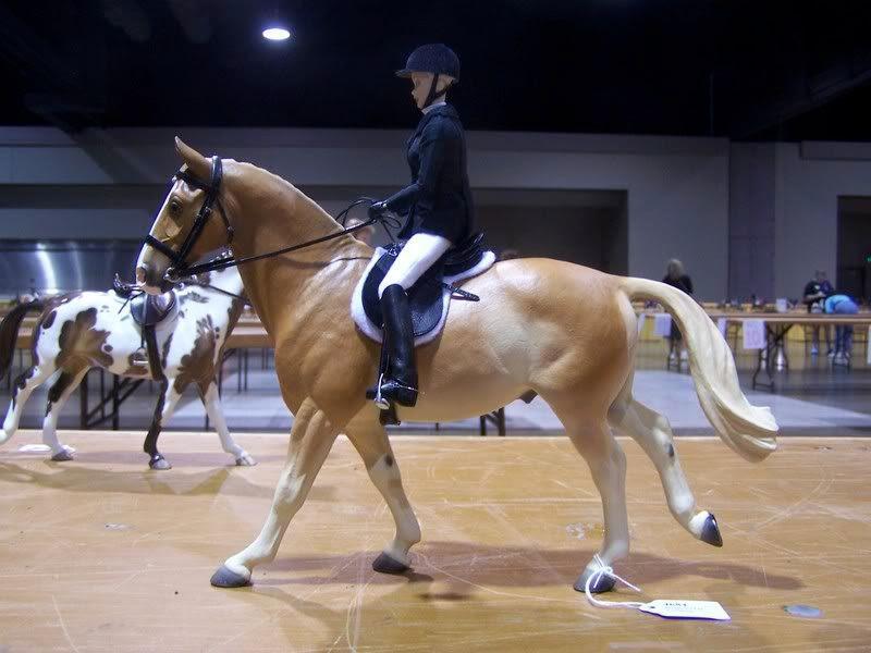 Harpo, Reserve Champion Sport Type English pleasure photo 100_6167.jpg