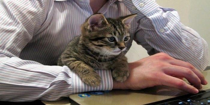 Unduh 93+  Gambar Video Kucing Lucu Paling Imut Gratis