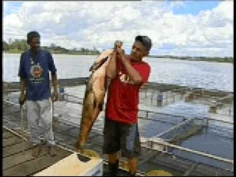 0:33 TOCANDO AGORA O peixe do lago paranoá em Brasília Distrito Federal