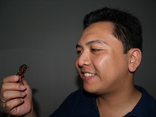 crickets in Cambodia