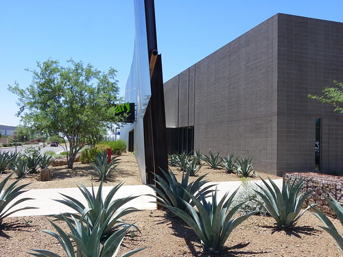 Agaves at Agave Library
