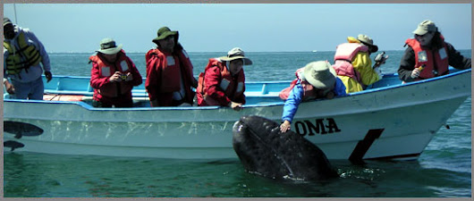 Baja Whale Watching Trips & Whale Watching Tours