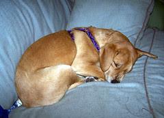 SleepySophieB