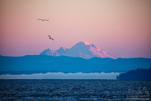 Mount Baker and Puget Sound, Edmonds, Washington