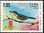 Cuban Vireo Vireo gundlachii