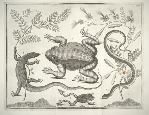 frog, lizard, snake illustrations