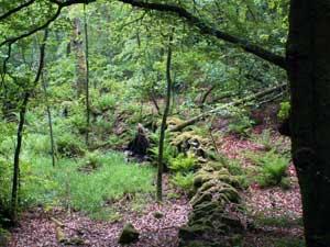 Trolsk gammal stengärdesgård i Söderåsens Nationalpark