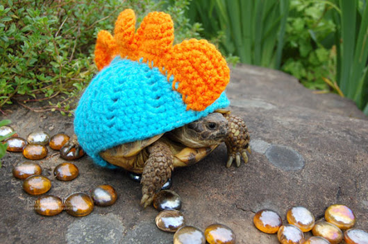 Image: 15+ Tiny Animals In Tiny Sweaters That Will Make You Go Aww ...