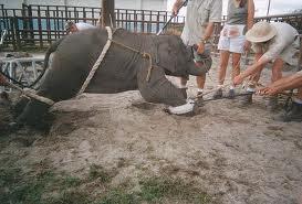 Autoridades cancelan funciones del circo Ringling por violar Acta de Bienestar Animal