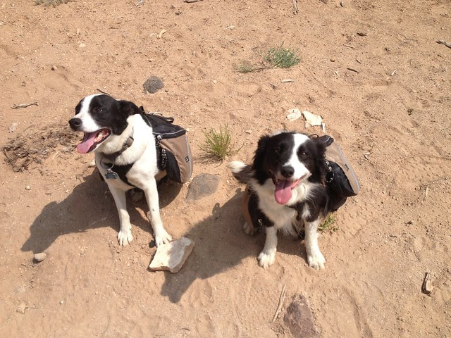 Doggies on Boulder Mail trail