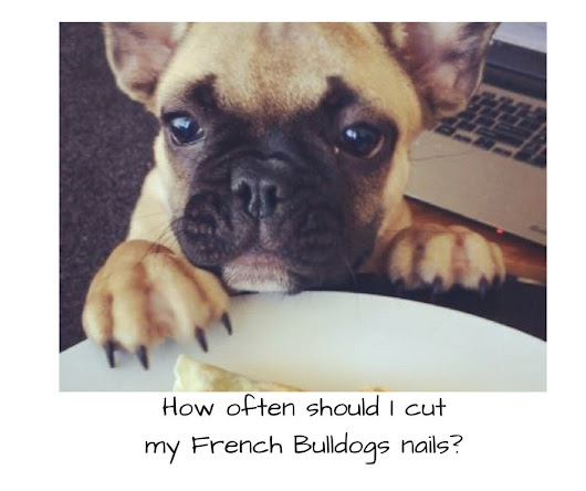 How often should I cut my French Bulldogs nails?