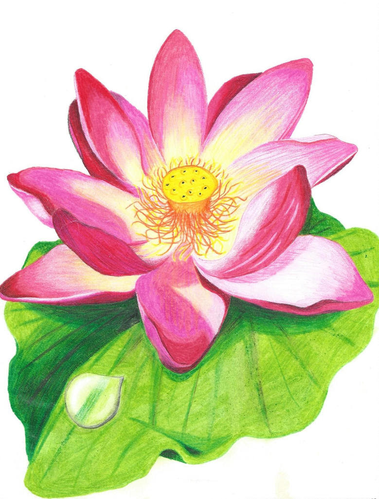 Lotus flower with colored pencil drawing by ...