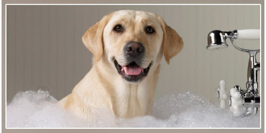 Can You Use Baby Shampoo For Dogs