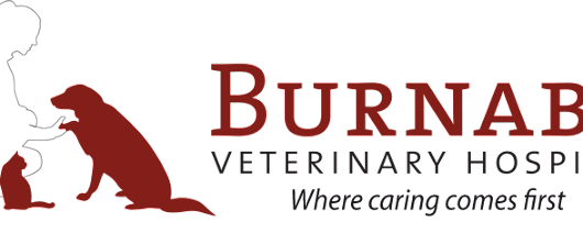 BC SPCA Day — Vets In Action 2013 | Burnaby Veterinary Hospital in Burnaby, BC