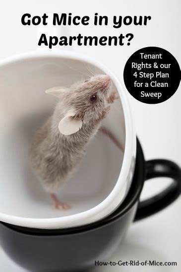 How to Get Rid of Mice in your Apartment