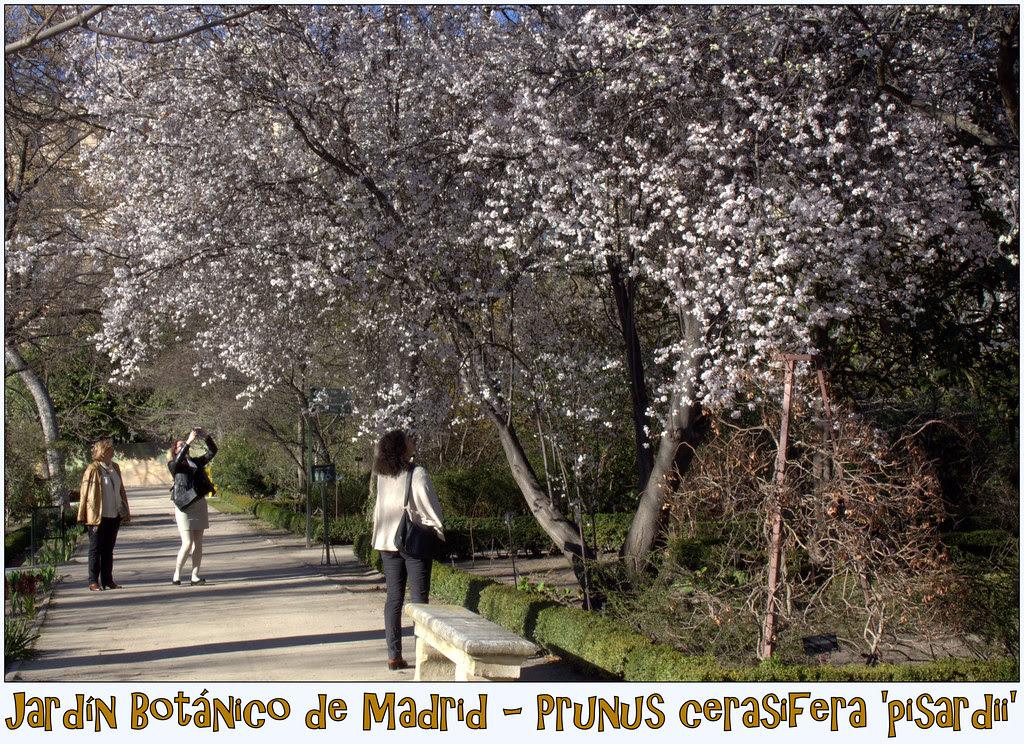 en el Jardín Botánico de Madrid. Marzo 2014