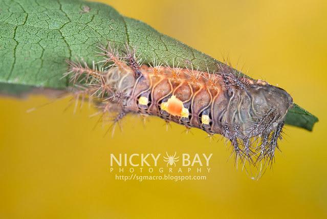 Caterpillar - DSC_9330